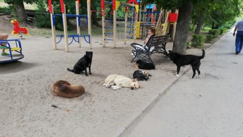 Бармен кафе на Набережной Саратова: «Бродячие собаки нас сильно беспокоят»