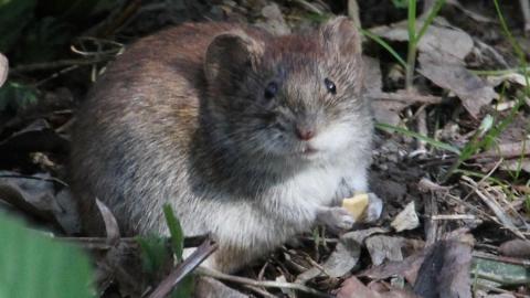 С начала сезона мышиной лихорадкой заразились 848 саратовцев