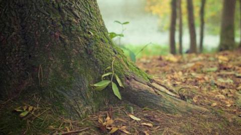 Разводить костры в лесах запрещено до 18 июля