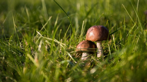 Специалисты рассказали, что надо делать с грибами, чтобы не отравиться