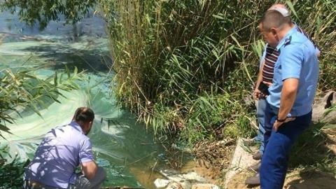 Прокуратура начала проверку по факту химического загрязнения пруда