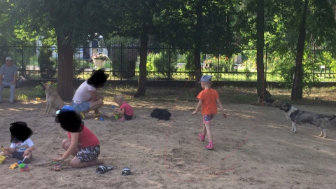 Дети делят игровую площадку с бродячими собаками