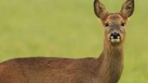 Четверых мужчин подозревают в браконьерстве