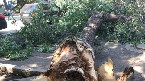 В центре Саратова упавшее дерево повредило авто и зацепило человека