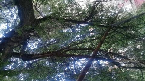 Дерево придавило газовую трубу