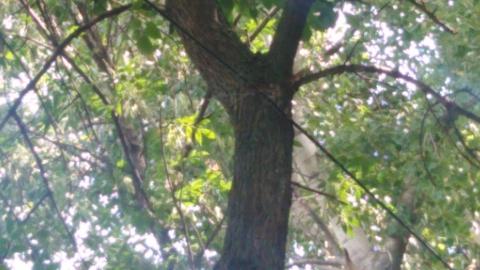 Силовой кабель закрепили на трубах и ветках деревьев