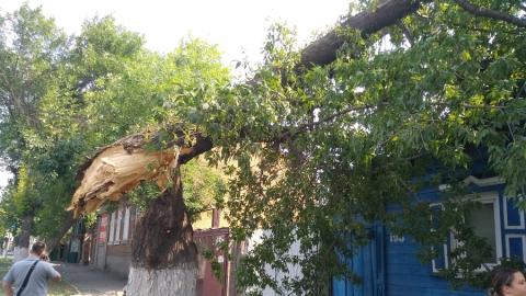 Вековой ясень проломил крышу дома в центре Саратова