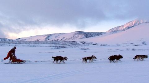 Чиновники поставили вне закона использование ездовых, тягловых и пастушьих зверей