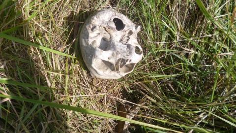 Во время сенокоса в поле нашли скелет человека