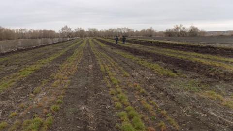 Лесоводов в Саратовской области допускали до работы без обследования психиатра