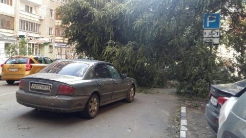 Огромный ясень рухнул на машины и перекрыл улицу Мичурина