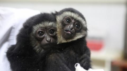 Дело о контрабанде детенышей редких обезьянок передано в суд