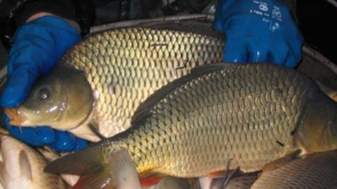 349 килограммов рыбы изъято из оборота в Саратовской области