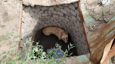 Из колодца достали провалившуюся собаку