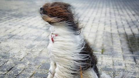 Шквалистое усиление ветра ожидается в регионе в субботу