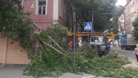 Рухнувшее около детского сада из-за урагана дерево убрали спустя пять дней