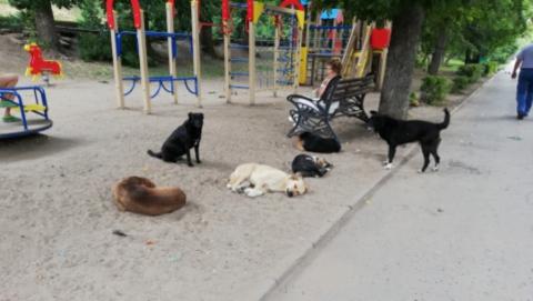 На саратовских улицах стало на 384 бездомных собаки меньше