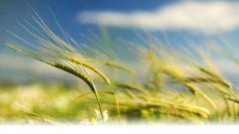 Завтра в Саратовской области будет солнечно ветрено
