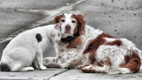 Сегодня отмечается Всемирный день бездомных животных