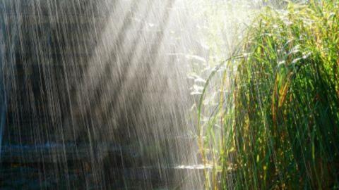 В Саратовской области возможны небольшие дожди и жара