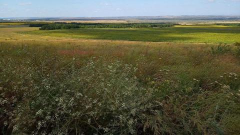 В Саратовскую область на месяц пришла аномальная жара