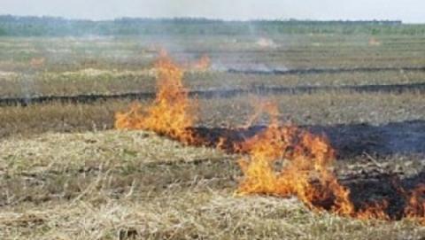 В полночь сгорело 50 тонн сена