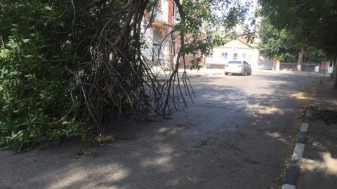 В центре Саратова сломанная ветка повредила автомобиль