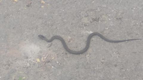 Змея напугала жителя Заводского района Саратова