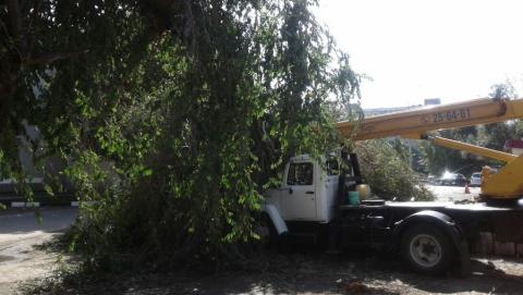 Дерево раздавило автовышку во время ночного ливня