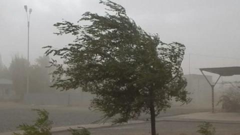 Спасатели обнародовали штормовое предупреждение: на Саратовскую область надвигаются гроза и сильный ветер