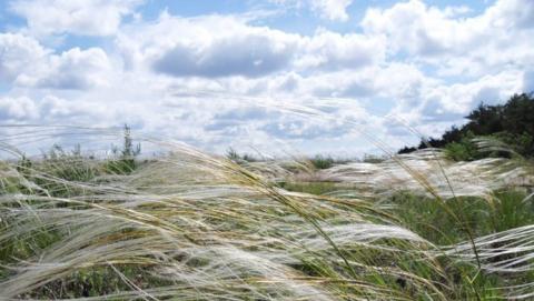 Сегодня в Саратовской области продолжит бушевать ветер