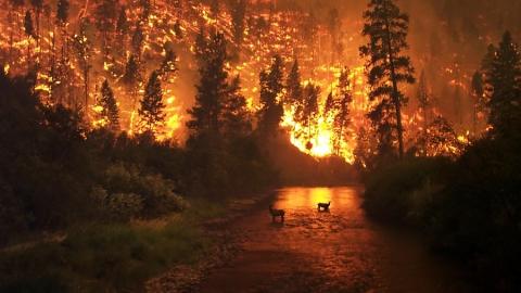 Огонь повредил 186 гектаров леса