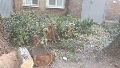 Жителям дома на улице Челюскинцев завалили подъездную дверь бревнами от свежеспиленного дерева