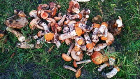 Двое детей и трое взрослых в этом сезоне отравились грибами