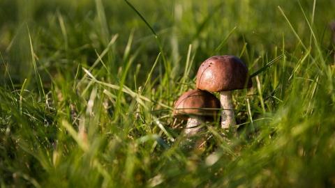 Как не отравиться грибами: советы Роспотребнадзора
