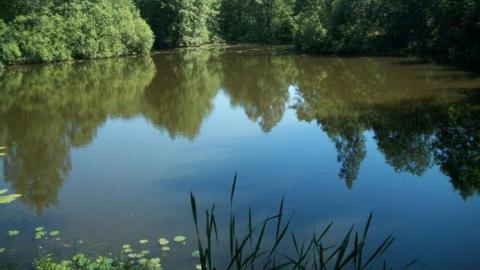 Купание в шести прудах Саратова опасно для здоровья