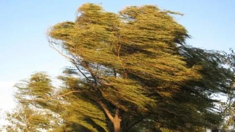 Сегодня синоптики обещают небольшой дождь и порывистый ветер