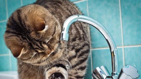 Сотни домов в двух районах Саратова почти на сутки останутся без воды