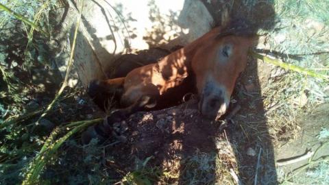 Спасатели вытащили кобылу Машу из колодца