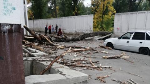 Упавшее дерево оставило без газа дом в Ленинском районе