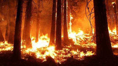 Чрезвычайная пожарная опасность объявлена в лесах Саратовской области