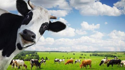 Фермершу подозревают в убийстве племенного скота