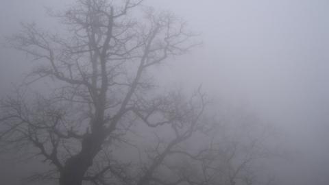 В Саратовской области будет дождливо и туманно