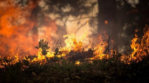 В двух районах области - высший класс пожарной опасности