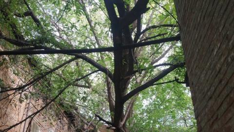 Упавшее дерево повредило трубу в центре Саратова