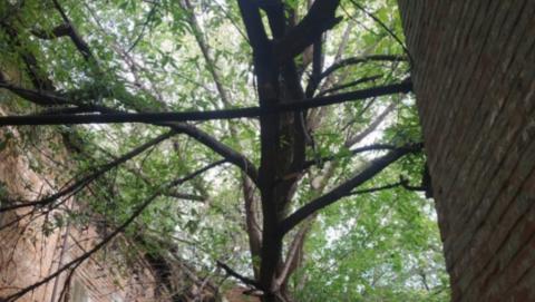 Дерево повредило трубу. Чиновники посоветовали людям обращаться туда, куда они не могут дозвониться