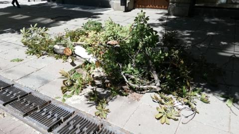 Саратовцы обеспокоены сносом деревьев на проспекте Кирова
