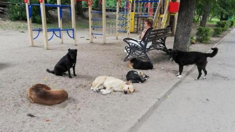 Почти девять тысяч бродячих собак отловят в Саратовской области
