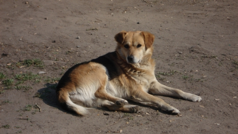Убийство собаки в Красном Куте. Одного из живодеров объявили в розыск
