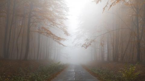 Днем будет туманно, ближайшие сутки станут дождливыми